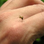 Pacific Island Mosquito-borne Disease Outbreak
