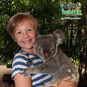 queensland, activity, koala, wildlife, habitat